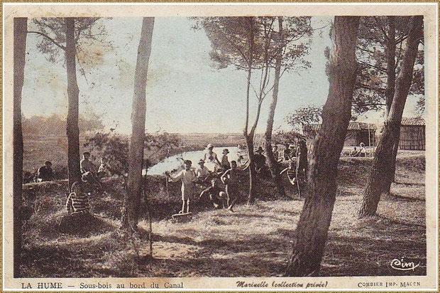 Gujan-Mestras autrefois : sous-bois en bordure du canal du Port de La Hume, Bassin d'Arcachon (carte postale, collection privée)