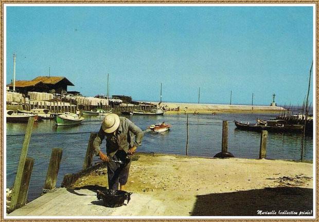 Gujan-Mestras autrefois : Ostréiculteurs coaltarant un piquet pour les cages à tuiles, Port de Larros, Bassin d'Arcachon (carte postale, collection privée)