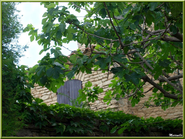 Belle bâtisse ancienne derrière la verdure - Goult, Lubéron - Vaucluse (84)