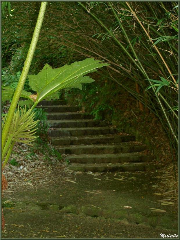 Rhubarbe géante (Gunnera manicata) en fleur à la Grotte Italienne et escalier menant plus sur un autre sentier - Les Jardins du Kerdalo à Trédarzec, Côtes d'Armor (22)