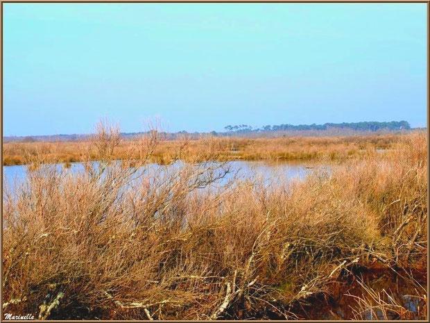 Réservoirs et marais aux couleurs hivernales, Sentier du Littoral, secteur Domaine de Certes et Graveyron, Bassin d'Arcachon (33)