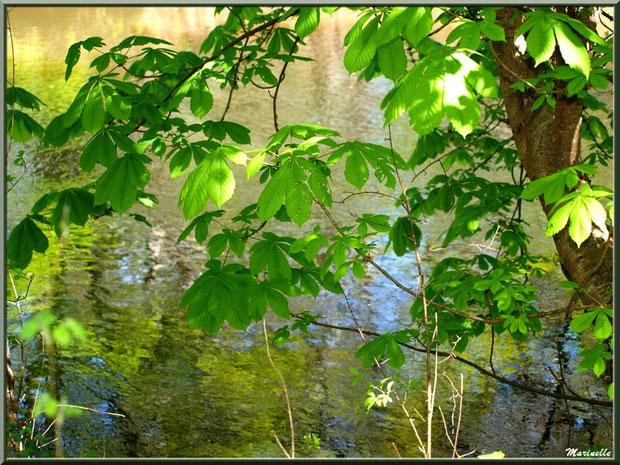 Marronniers et reflets sur La Leyre, Sentier du Littoral au lieu-dit Lamothe, Le Teich, Bassin d'Arcachon (33)