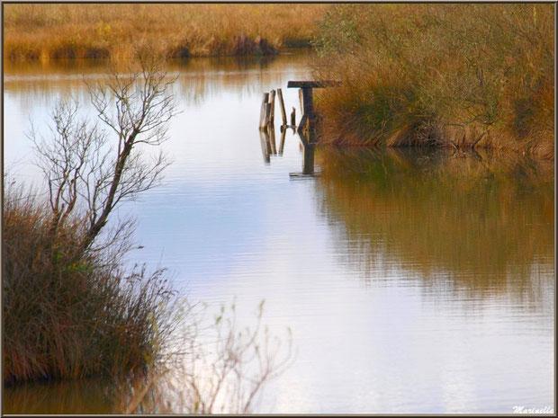 Ancien ponton et ses reflets dans un réservoir, Sentier du Littoral, secteur Moulin de Cantarrane, Bassin d'Arcachon