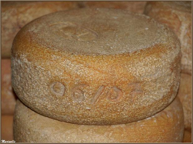 Fromage en concours, Fête au Fromage, Hera deu Hromatge, à Laruns en Vallée d'Ossau (64)