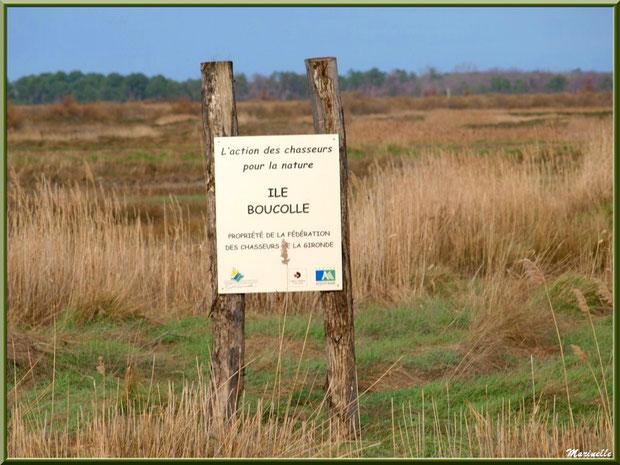 Marais de l'île de Boucolle, Sentier du Littoral, secteur Port du Teich en longeant La Leyre, Le Teich, Bassin d'Arcachon (33)