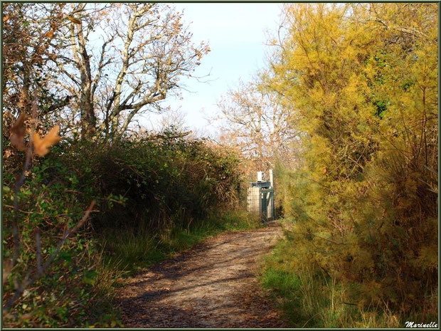 L'écluse du Tanin en bordure du sentier, Sentier du Littoral, secteur Port du Teich en longeant La Leyre, Le Teich, Bassin d'Arcachon (33)
