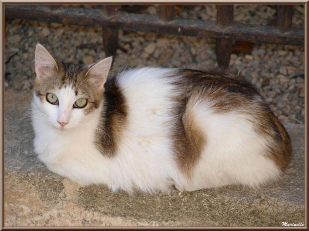 Chat sur pas de porte maison