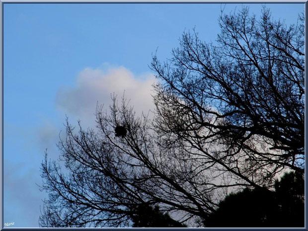 Nid dans un arbre au Parc de la Chêneraie à Gujan-Mestras (Bassin d'Arcachon)