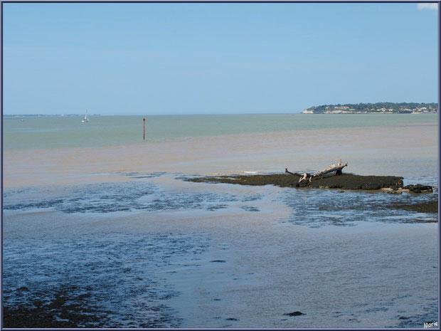 En bordure de La Gironde à Talmont-sur-Gironde et Meschers-sur-Gironde en arrière plan, Charente-Maritime