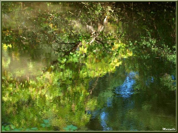 Reflets d'automne sur La Leyre, Sentier du Littoral au lieu-dit Lamothe, Le Teich, Bassin d'Arcachon (33)