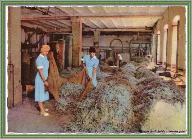 Il y a quelques années... Distillation de la lavande, parfumerie Fragonard  (carte postale - collection privée)