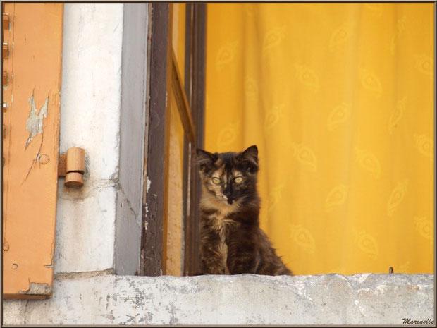 Chat à la fenêtre, village de Laruns, Vallée d'Ossau (64)