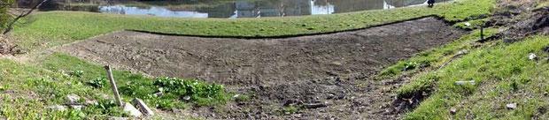 キタミソウ自生地がこんな有様に!深さ10cmほどにごっそり剥がされていた。 どこに移植したのだろう?