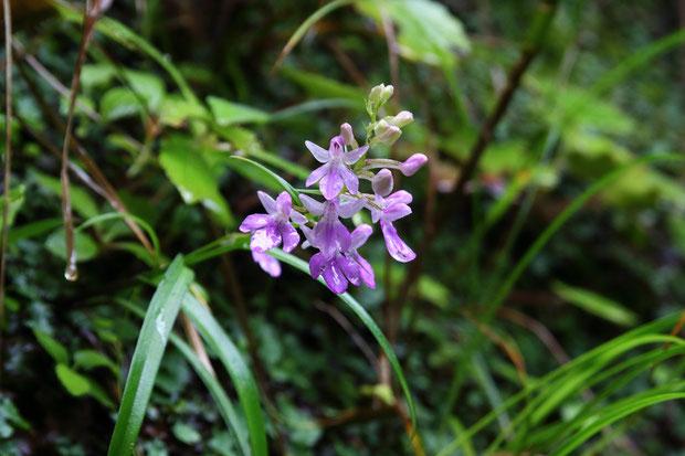 雨に濡れそぼった花もまたイイね。 恐ろしく不安定な場所に咲いていた