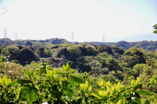 眼下には開発を免れた森林が広がる