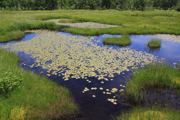 美しい池塘がたくさん見らる場所もあった