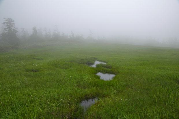 霧に煙る小湿原 点々と白く見えるのはワタスゲ