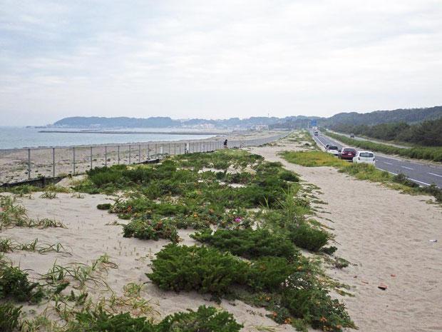 子供の頃よく訪れた茨城県の海岸 だいぶ様相が変わっていた