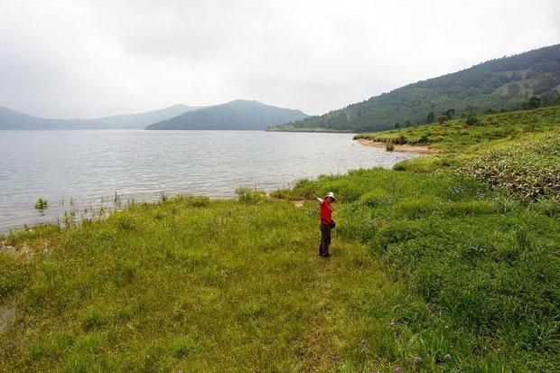 第2キャンプ場前の湿原にて。今日は水位がとても高い。湖畔には花たちが咲き乱れる。
