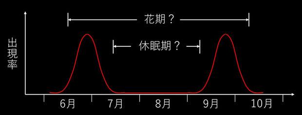 7年ほど観察したマヤランの出現率のイメージはこんな感じ。 今後裏付けの観察が必要です