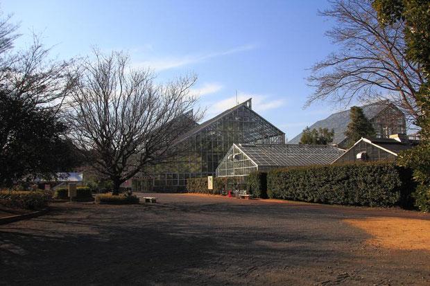 つくば実験植物園  平日のためもあってか、見学者は少なかった。