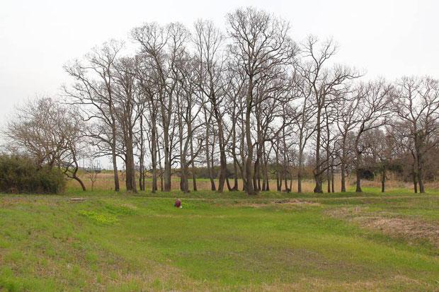 草は生えているが、落葉樹の葉の芽吹きはまだでした