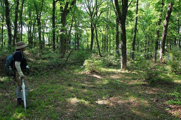 セイタカスズムシソウは明るい落葉樹林下にいました。 土は乾いた感じで薄く、石や岩が多かった。