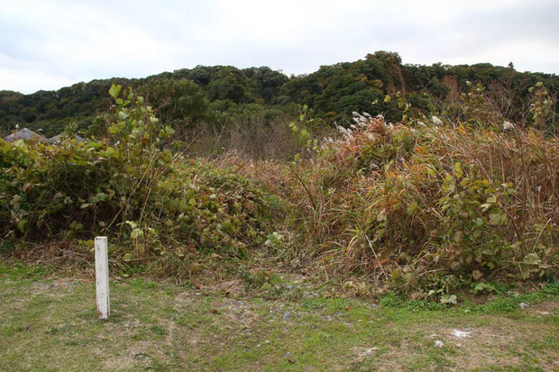 河原への小径は、クズやススキなどの植物で覆われ見えなくなっていた... 別のルートで入りました