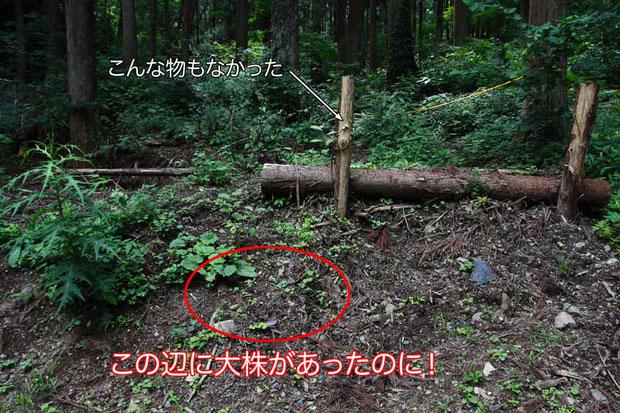 ここを知る人は多いと思います。 ツチアケビがいた場所には、どっさり土が盛られてしまっていた