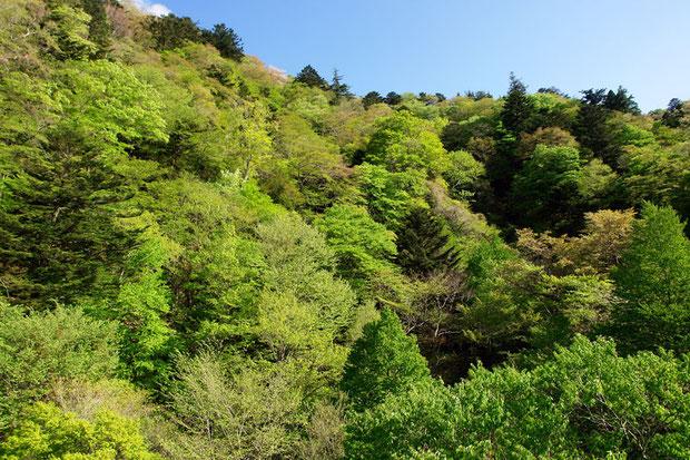東京電力福島第一原発から20km圏内にある、美しい渓谷(2009年4月)
