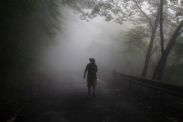 こんな濃霧の中、花を捜し始めた。 標高は1100m位。