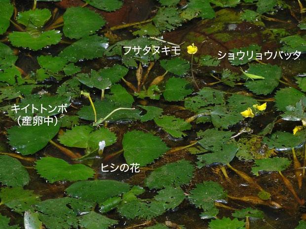 多くの生き物を育む溜池