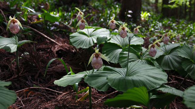 私たちにとっては「野山に自然に咲く花」と信じられることが大事。 人が植えた花には興味を持てない