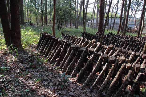 お店は原木椎茸の栽培地の中にあります。 お店のすぐ裏手は広大な栽培地なのです。