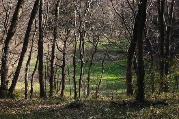 枯れかけた湿地 冬だから?