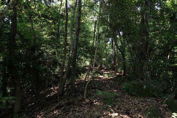 自分たちだけだったら 道も判然としないこの森に 足を踏み入れることさえなかっただろう