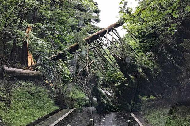 倒木で通せんぼ。 林道入口には何もサインがなかったのでびっくり。 これでは車は通れない!