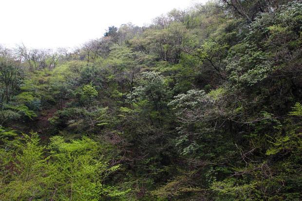 岐阜県の多様性に富んだ植生の山林