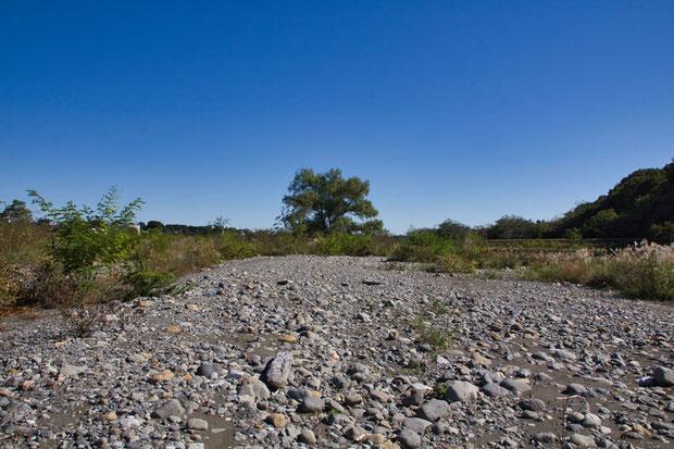 かつて群生していた場所は、壊滅状態で1株もない。 しばし目の前の風景が信じられなかった