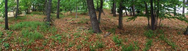 住宅街の中に奇跡的に残されていた雑木林
