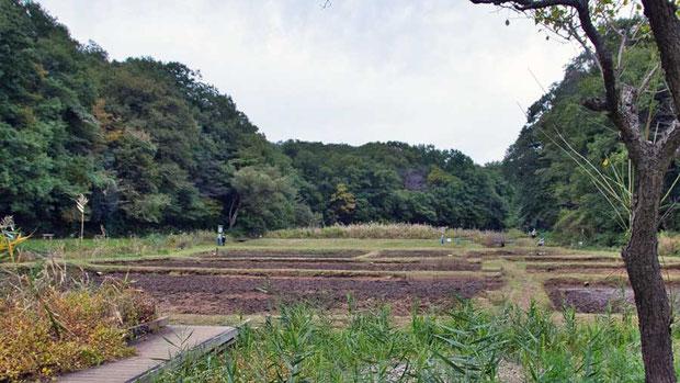 田んぼは耕運機が入り、すっかり耕されていた