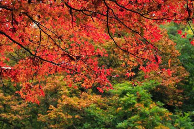 北秋川渓谷の紅葉