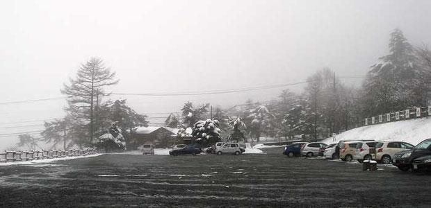清泉寮前の駐車場  花は雪の下