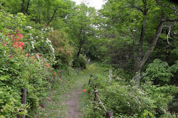 反対側から。 ここは冷温帯林ですが、冷気の影響でこの場所だけ高山性の植物が生育します。