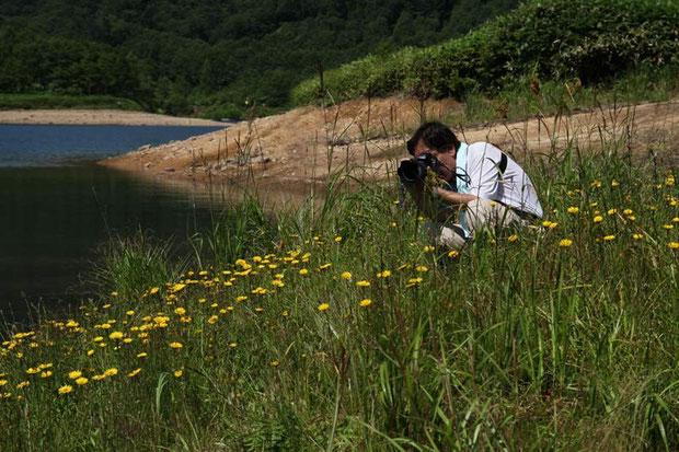 ミズギクを撮る野反湖の友人・中村一雄さん  2011.08.09 群馬県 野反湖