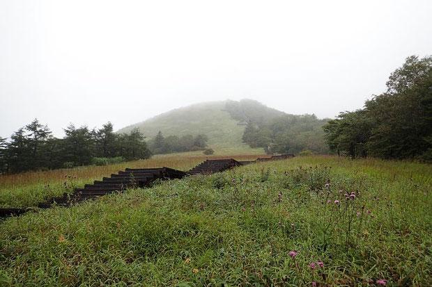 延々と続く階段 奥の山の上まで続く 花が少ないので階段の写真ばっかりでスミマセン
