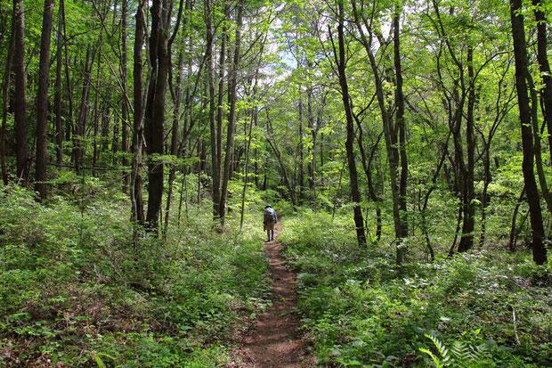 とても気持ちが良い森 小鳥のさえずりと小川のせせらぎしか聞こえない ほぼ平坦で危ない場所もない