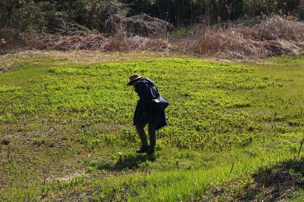 春の花たちが咲き始めた  以下の写真はすべて2019.03.31 茨城県南部 標高約14mでの撮影