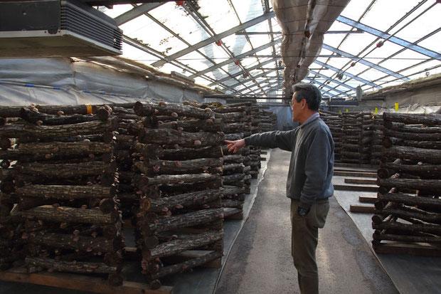 原木栽培について説明してくれる園長さん。 収量や見栄えより味・香り・食感を優先させているとのこと