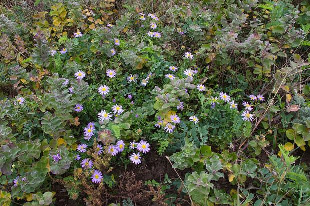 ライバルが多い場所では、負けじと懸命に茎を高く伸ばして、花を咲かせていました